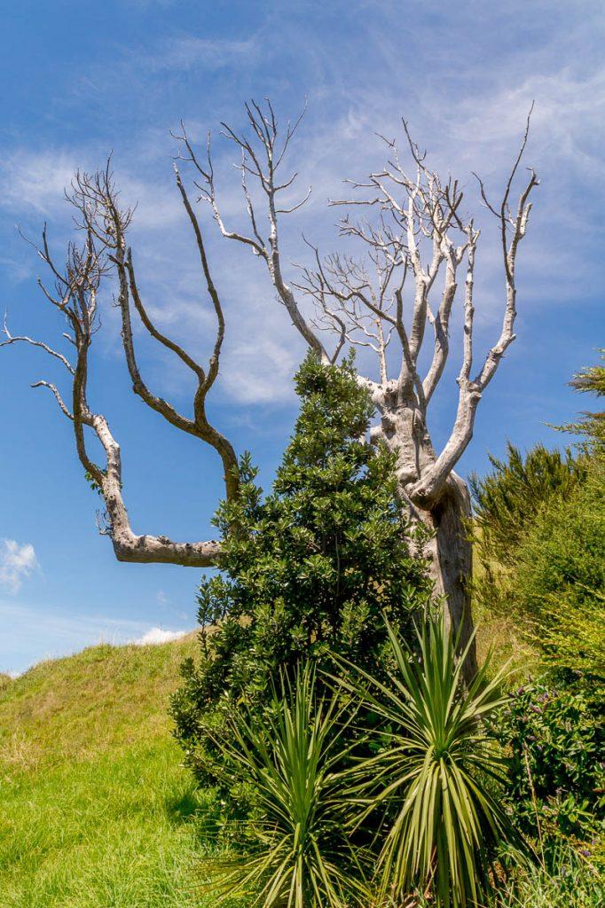 Spookachtige boom,Devonport, Auckland, Auckland, Nieuw Zeeland (2011)