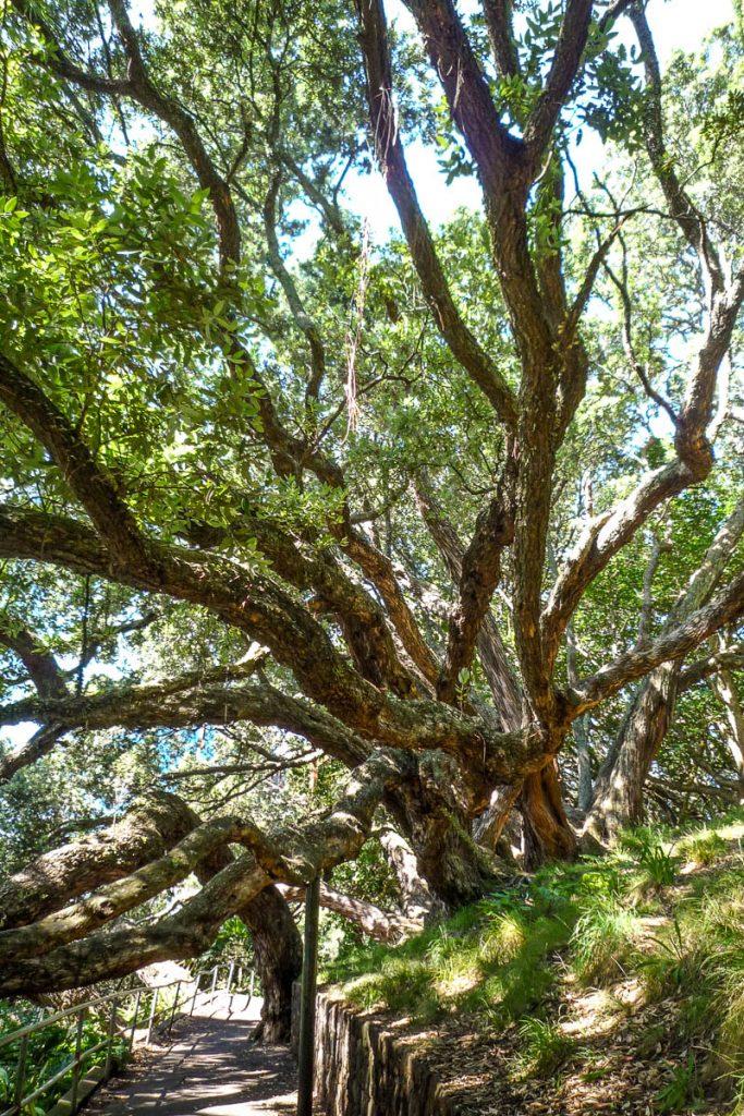 Overhangende bomen,Albert Park, Auckland, Auckland, Nieuw Zeeland (2011)