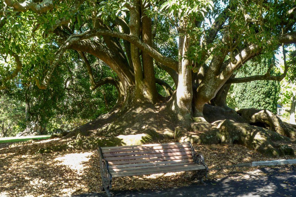 Chillen in de schaduw,Albert Park, Auckland, Auckland, Nieuw Zeeland (2011)