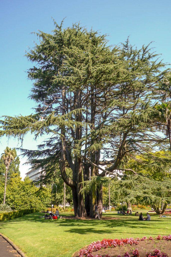 Boom,Albert Park, Auckland, Auckland, Nieuw Zeeland (2011)
