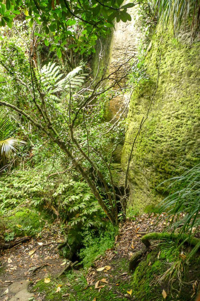 Groen,Nikau Walk, Waikeratu, Auckland, Nieuw Zeeland (2011)