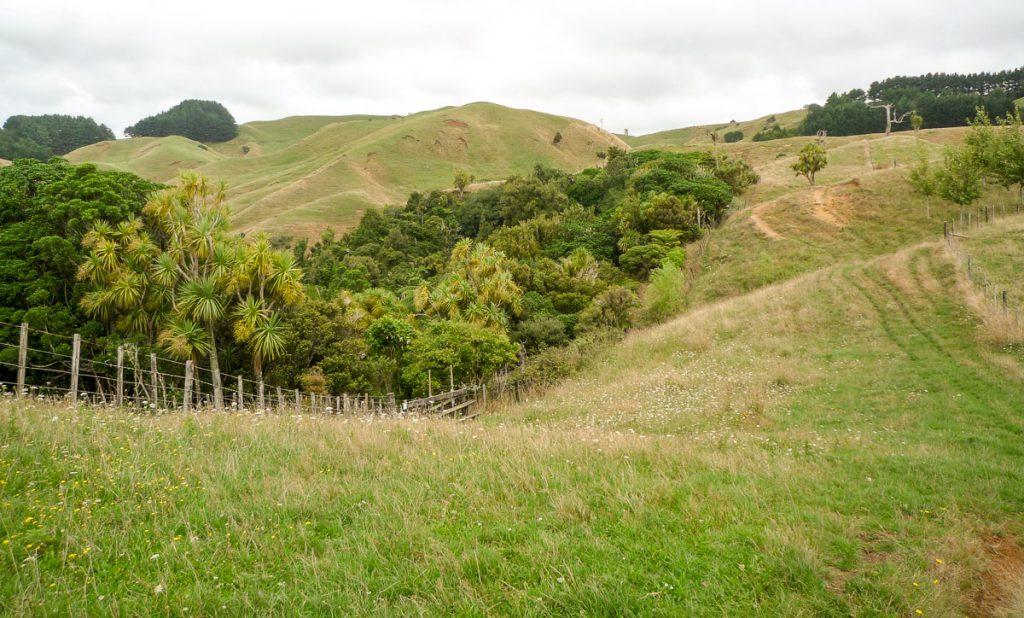 Heuvels,Nikau Walk, Waikeratu, Auckland, Nieuw Zeeland (2011)