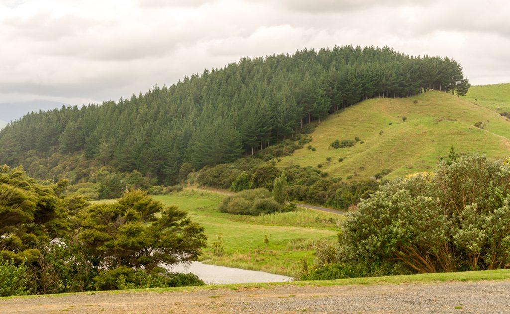 Boom lijn,Oparau Roadhouse, Oparau, Waikato, Nieuw Zeeland (2011)