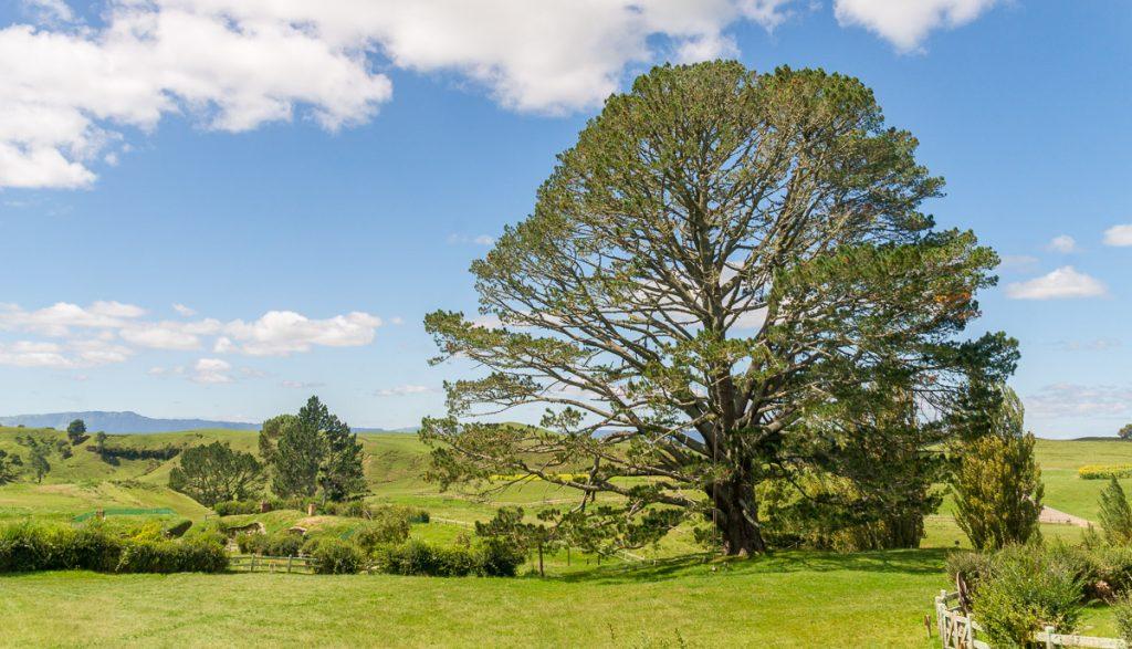 Feestboom,Hobbiton, Matamata, Waikato, Nieuw Zeeland (2011)