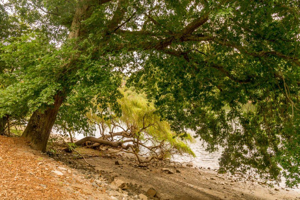 Overhangende boom,Hamilton, Waikato, Nieuw Zeeland (2011)