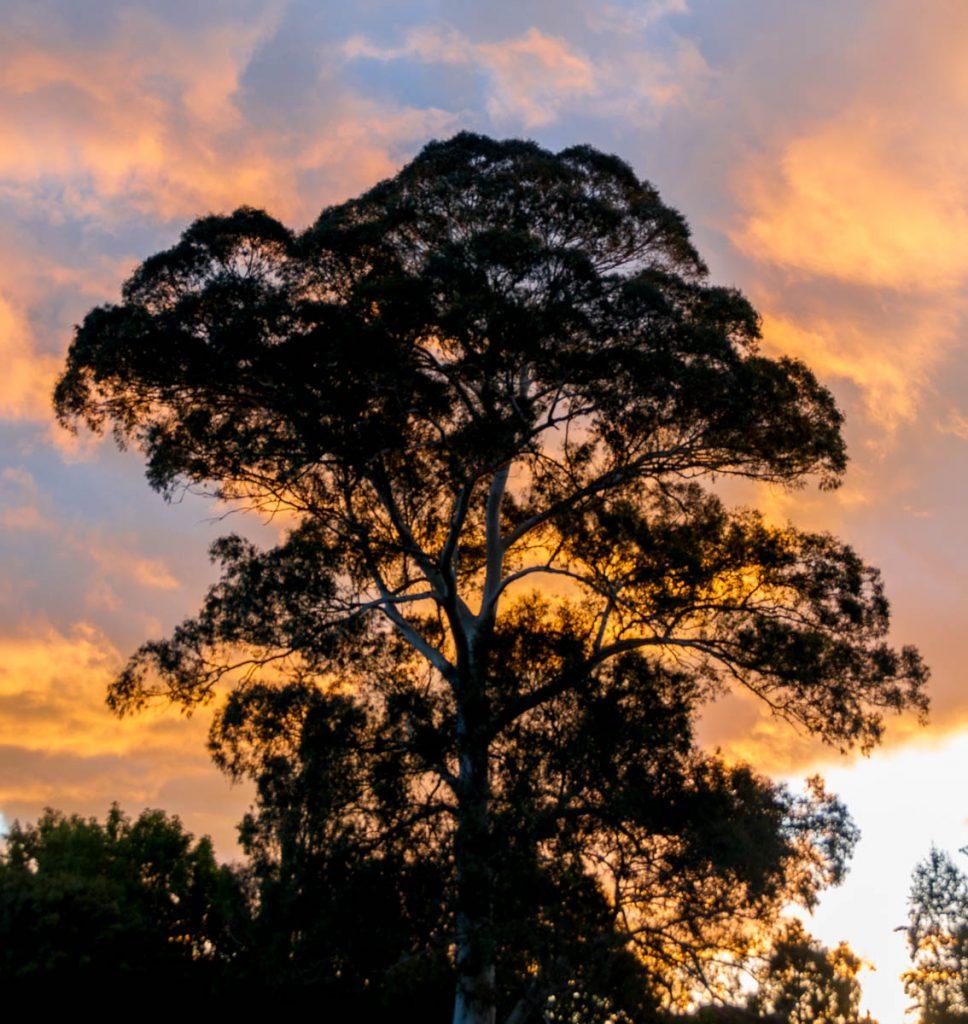 Zonsondergang,Hamilton, Waikato, Nieuw Zeeland (2011)