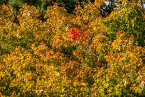 Een plukje herfst