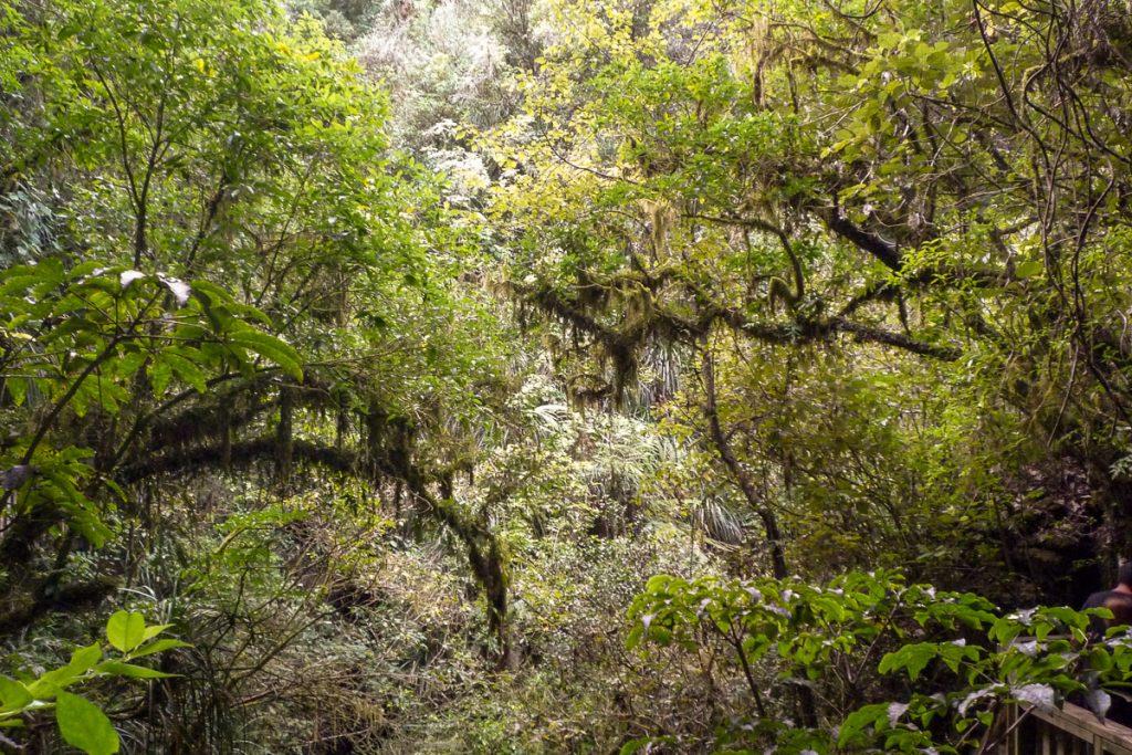 Groen,Ruakuri Walk, Waitomo Caves, Waikato, Nieuw Zeeland (2011)
