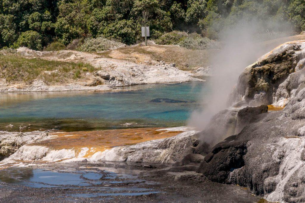Blauw meertje 'Bluey',Te Puia, Rotorua, Bay of Plenty, Nieuw Zeeland (2011)
