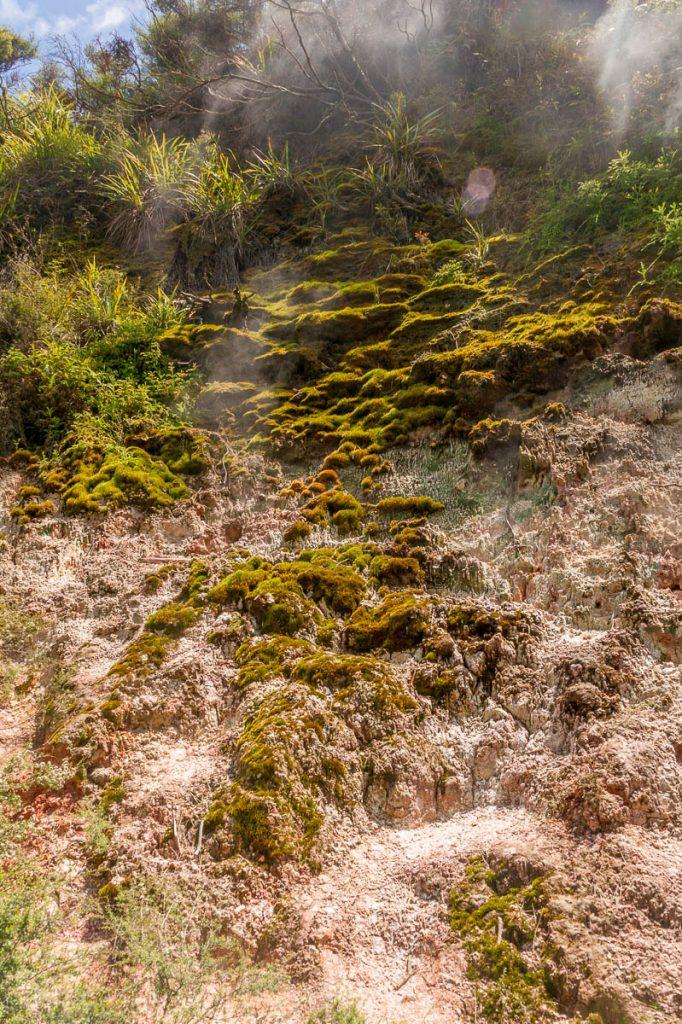Geothermische activiteiten,Wairakei Thermal Valley, Wairakei, Waikato, Nieuw Zeeland (2011)