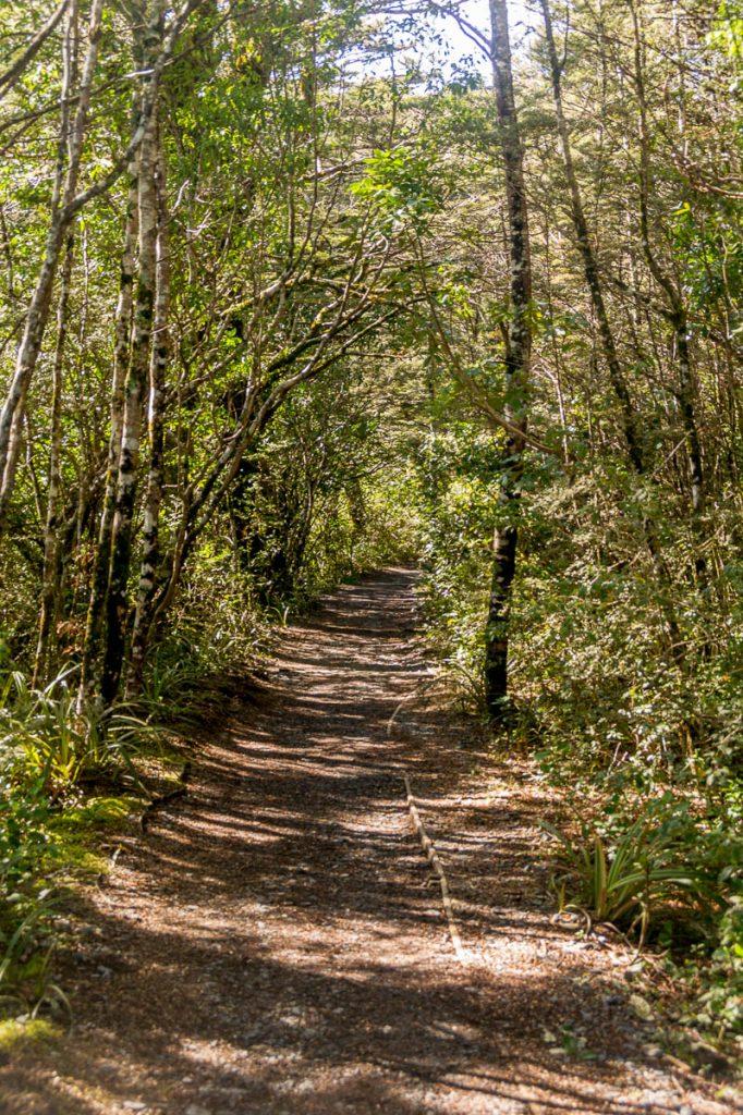 Wandelpad,Taranaki Falls Loop Track, Tongariro National Park, Manawatu-Wanganui, Nieuw Zeeland (2011)