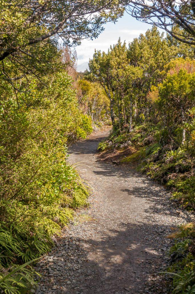 Bochtjes,Taranaki Falls Loop Track, Tongariro National Park, Manawatu-Wanganui, Nieuw Zeeland (2011)