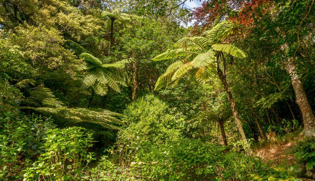 Groen,Botanic Gardens, Wellington, Wellington, Nieuw Zeeland (2011)