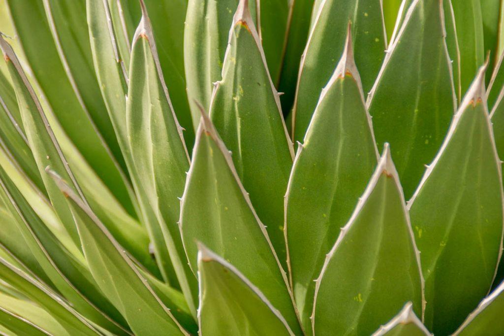Stekeltjes,Botanic Gardens, Wellington, Wellington, Nieuw Zeeland (2011)