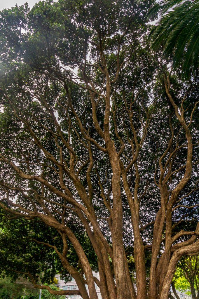 Gefilterd zonlicht,Botanic Gardens, Wellington, Wellington, Nieuw Zeeland (2011)