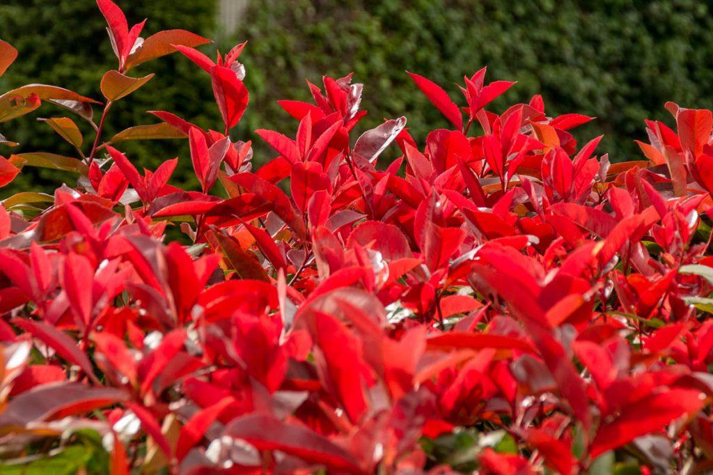 Rood,Botanic Gardens, Wellington, Wellington, Nieuw Zeeland (2011)
