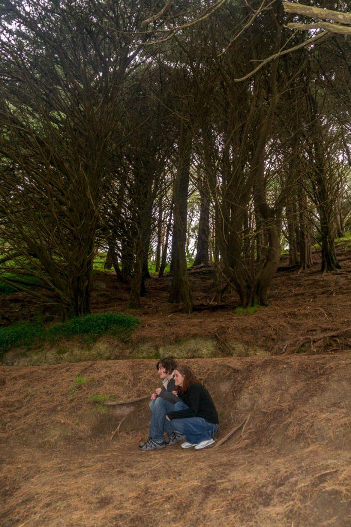 Op deze plek verstopten de hobbits zich onder een boomstronk voor de Nazgûl,Town Belt, Wellington, Wellington, Nieuw Zeeland (2011)