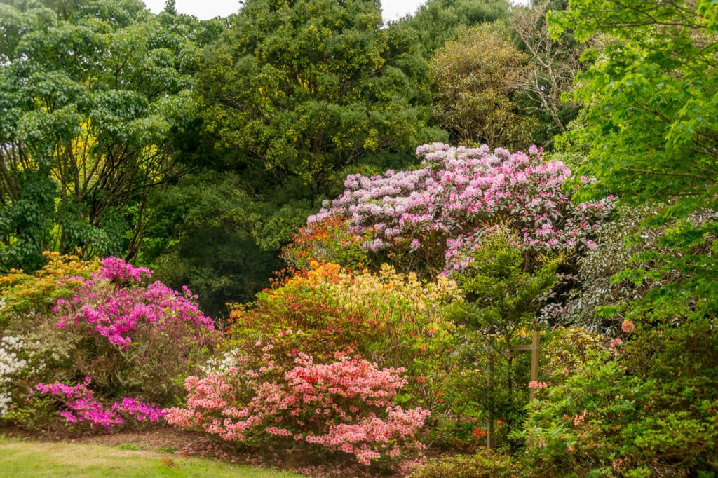 Isengard tuin,Isengard Gardens, Upper Hutt, Wellington, Nieuw Zeeland (2011)