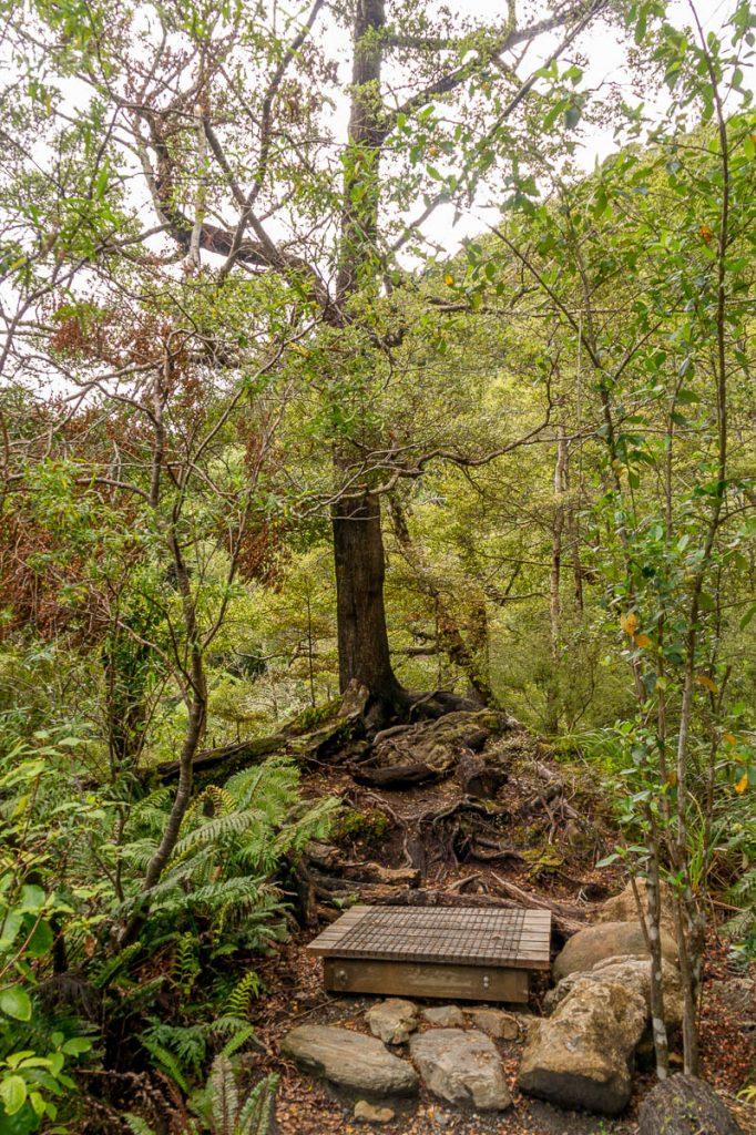 Legolas-boom,Rivendel, Upper Hutt, Wellington, Nieuw Zeeland (2011)