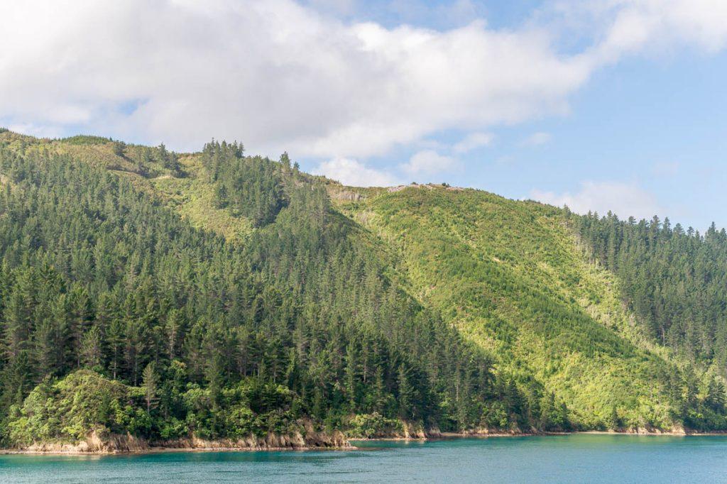 Groen,Tory Channel, Marlborough, Nieuw Zeeland (2011)