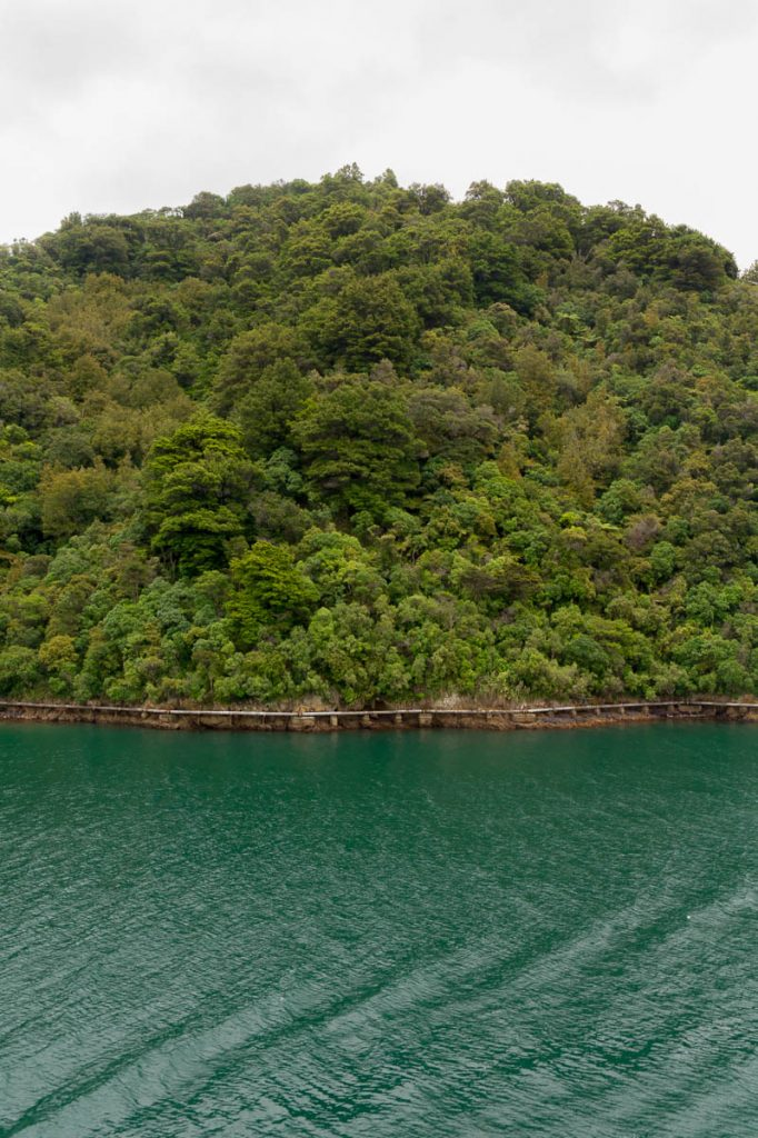 Heuvel,Queen Charlotte Sound, Marlborough, Nieuw Zeeland (2011)