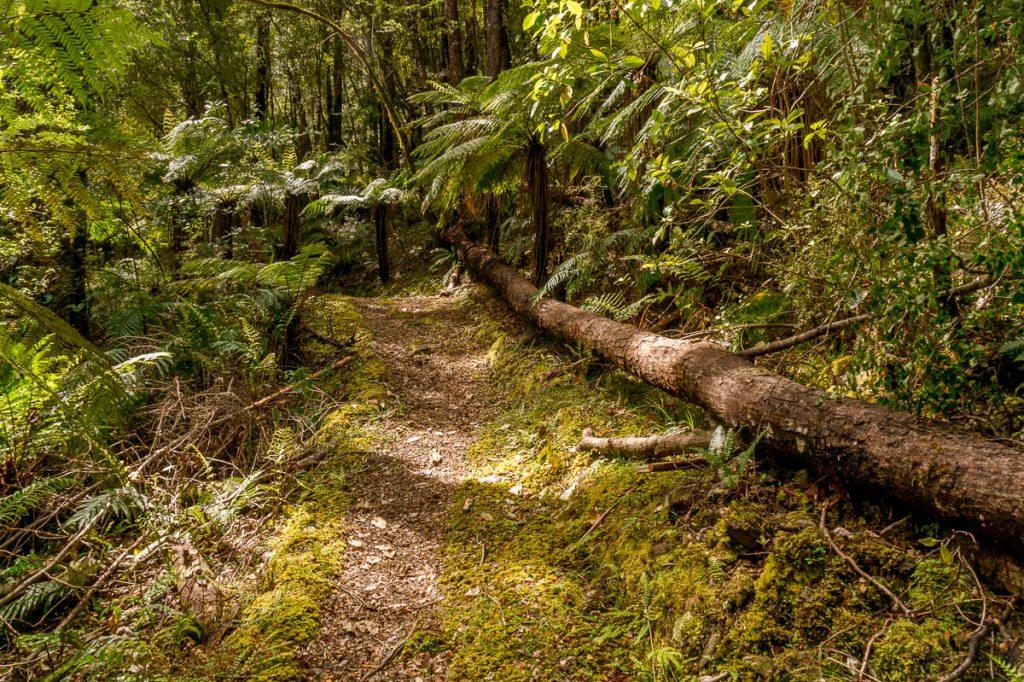 Wandelpad,Inangahua, West Coast, Nieuw Zeeland (2011)