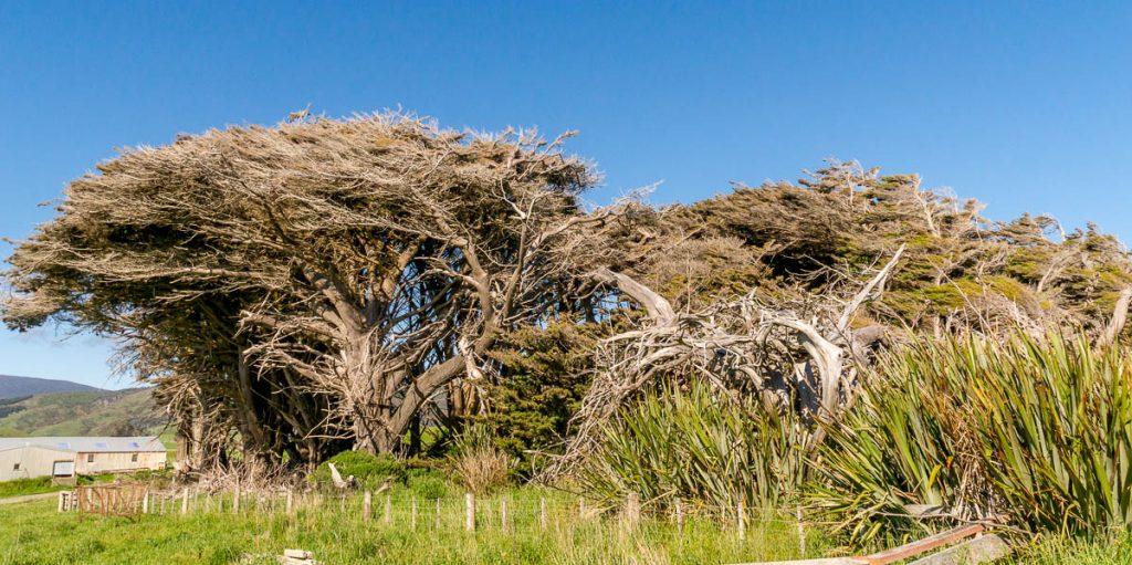 Van welke kant ou de wind komen?,Te Waewae, Southland, Nieuw Zeeland (2011)