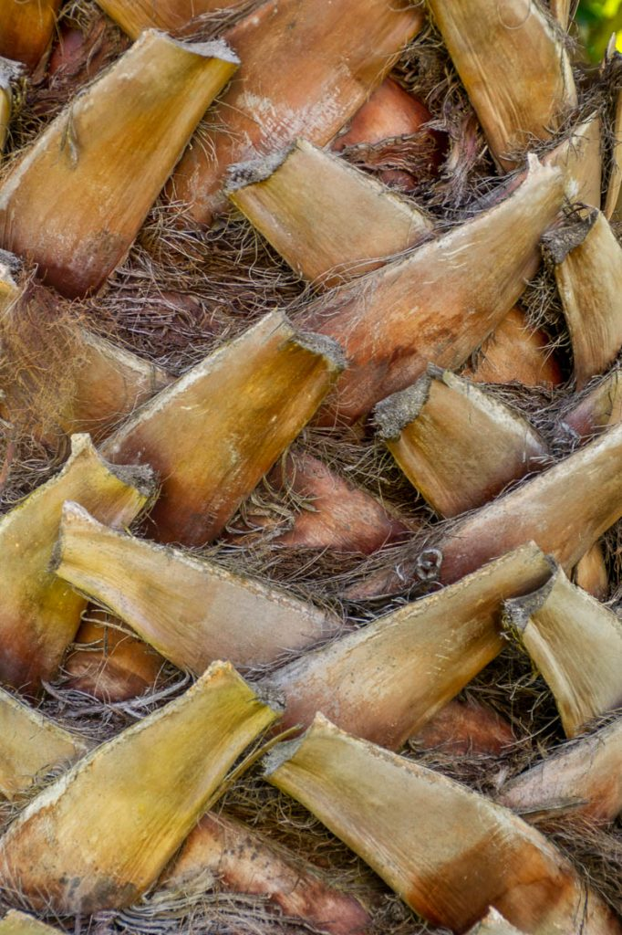 Palmboom,Clive Square, Napier, Hawke's Bay, Nieuw Zeeland (2011)