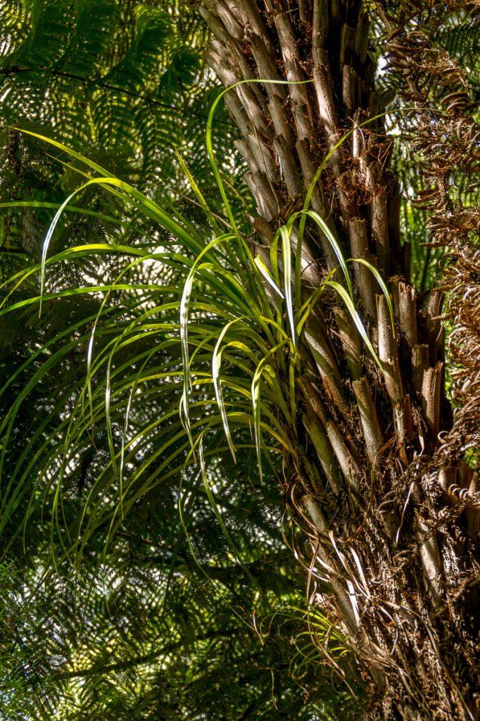 Het groeit weer aan,Karangahake Gorge, Karangahake, Waikato, Nieuw Zeeland (2011)