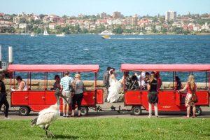 Een bruid, een treintje, een ibis...