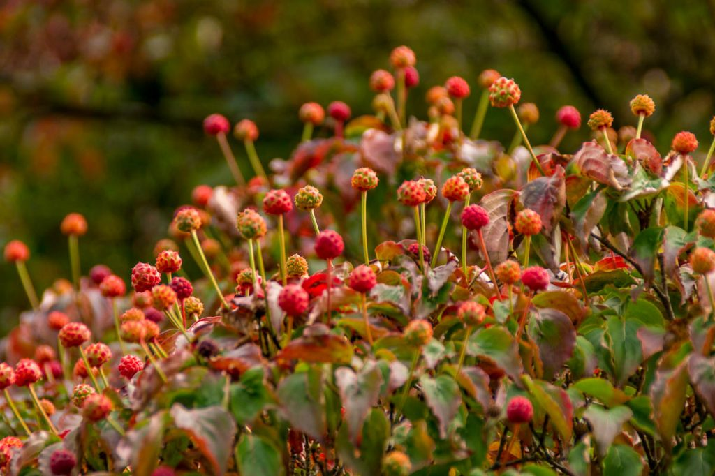 Fruit of Bloemen?,Zuiderpark, Den Haag, Zuid-Holland (2013)