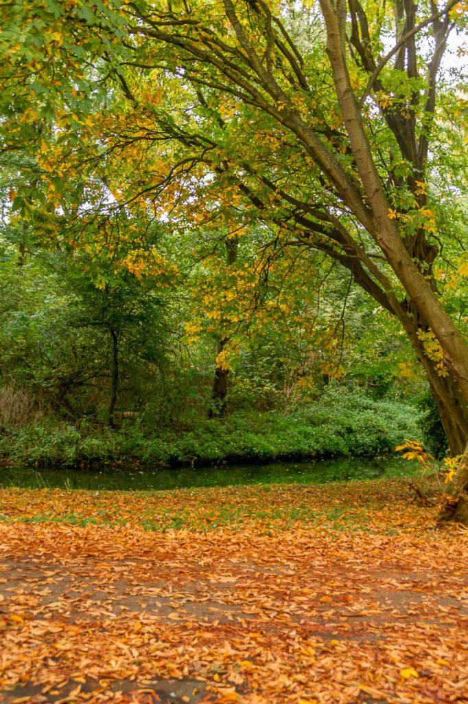 Herfstkleuren,Zuiderpark, Den Haag, Zuid-Holland (2013)