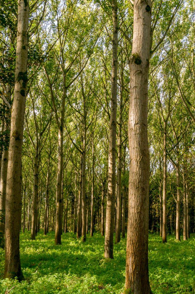 Door het bos,Lelystad, Flevoland (2013)