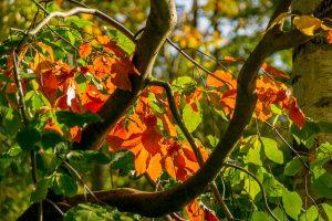 Herfstkleuren