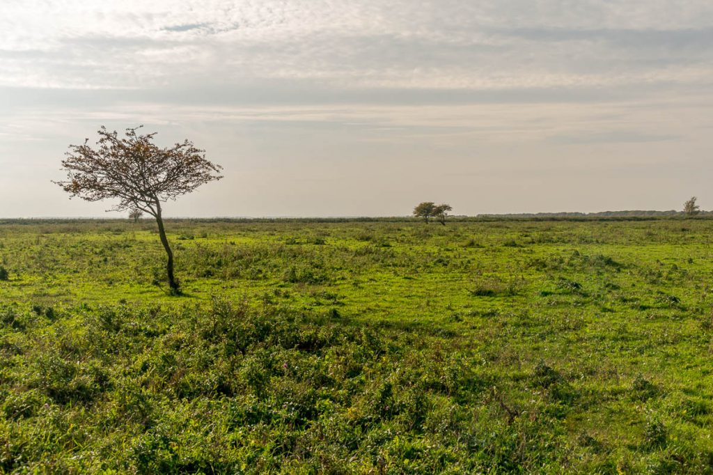 Eenzaam boompje,Lelystad, Flevoland (2013)