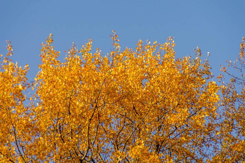 Herfstkleuren,Zuiderpark, Den Haag, Zuid-Holland (2014)