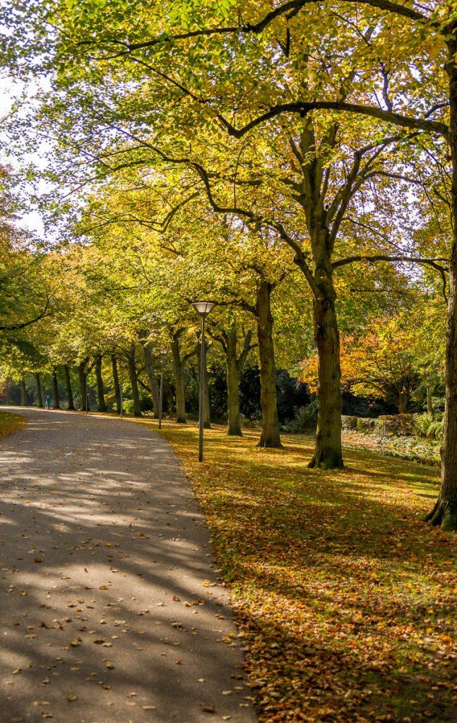 Op een rijtje,Zuiderpark, Den Haag, Zuid-Holland (2014)