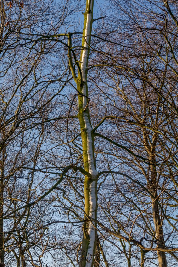 Half half,Zuiderpark, Den Haag, Zuid-Holland (2014)