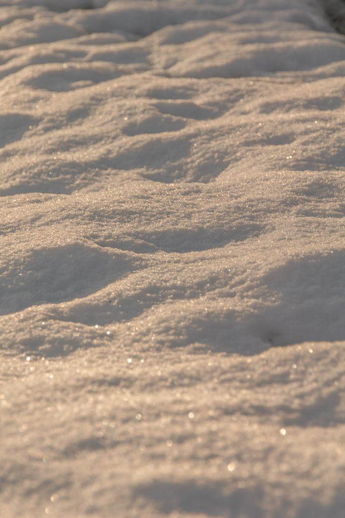 Sneeuw,Zuiderpark, Den Haag, Zuid-Holland (2014)