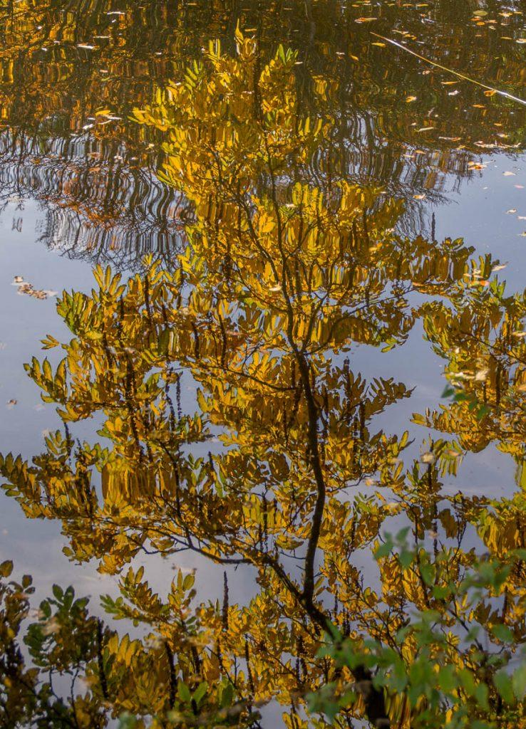 Reflectie,Zuiderpark, Den Haag, Zuid-Holland (2015)