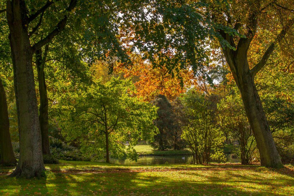 Herfstkleuren,Zuiderpark, Den Haag, Zuid-Holland (2015)
