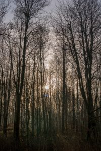 Ik zie door de bomen het bos