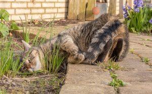 De kat van de buren heeft z'n gekke uurtje