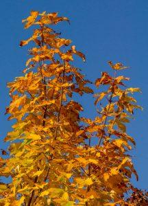 Genieten van de herfstkleuren