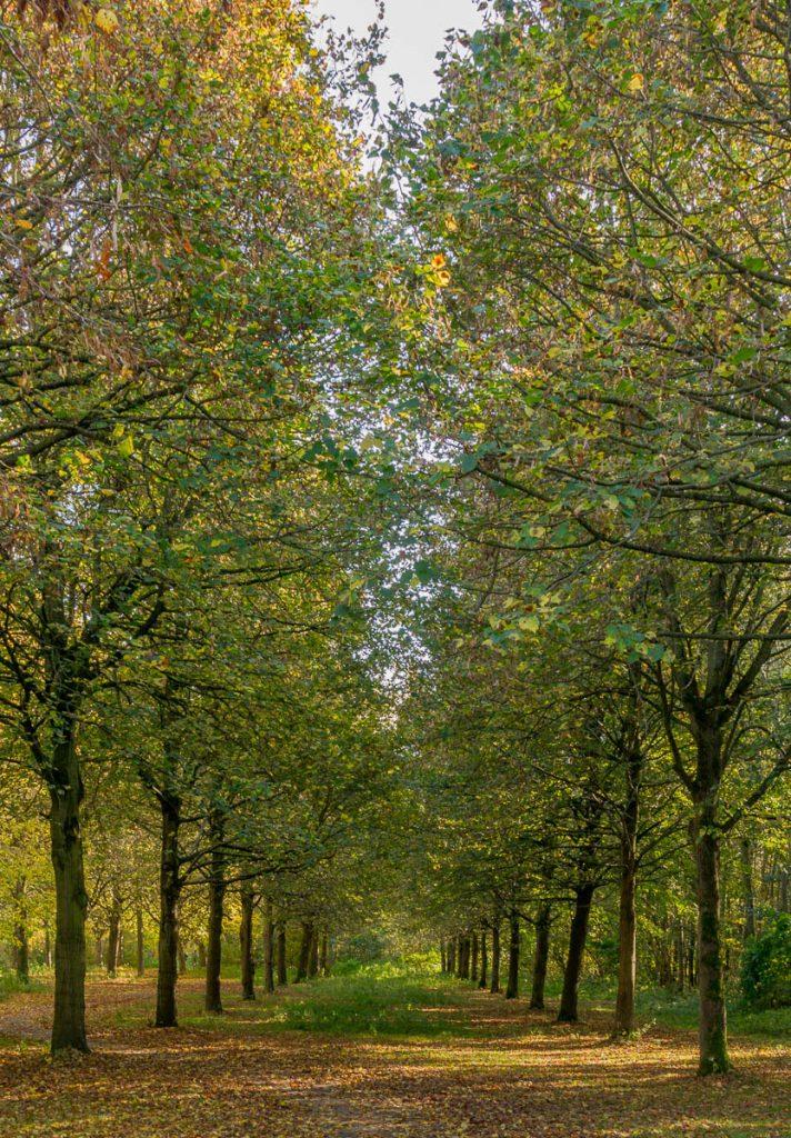 Tussen de bomen door,Lelystad, Flevoland (2016)