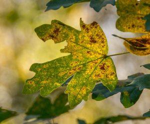 De bladeren verkleuren
