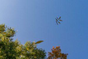 De bladeren vliegen om je oren