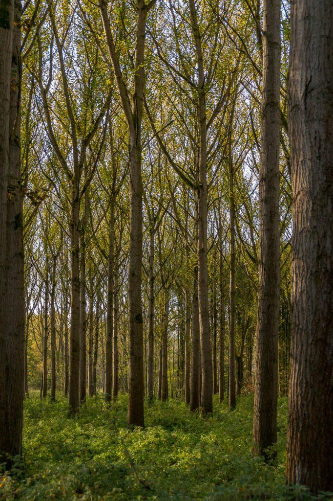 Zelfs door de bomen het bos zien,Lelystad, Flevoland (2016)